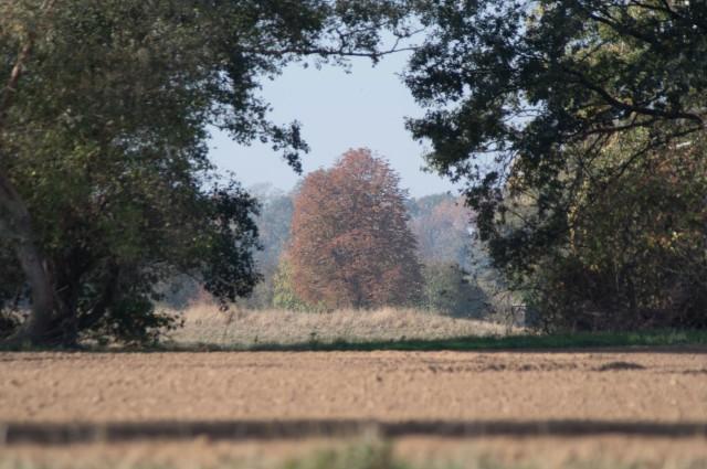 Durchblick auf den Herbst.